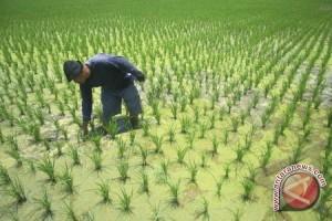 Mukomuko Bengkulu bangun embung pengairan sawah