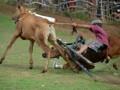 Karapan sapi Piala Presiden di Madura
