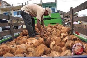 Kelapa Bengkulu geser dominasi Lampung di pasar Bekasi
