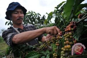 Ekspor kopi instan Lampung capai 1,3 juta dolar AS