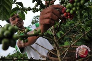 Volume eskpor kopi Sumsel masih rendah