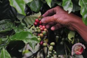 Ekspor kopi instan lampung Agustus naik