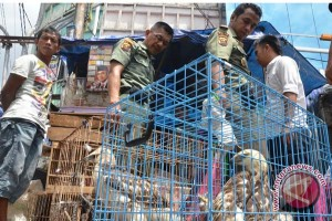 Pedagang satwa liar ditangkap di Gorontalo