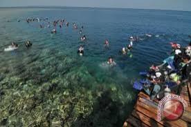 Teluk Lampung terkontaminasi alga