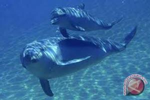 Pecinta lingkungan sambut baik larangan bir paus