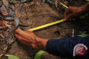 WWF temukan jejak badak Sumatera di Kutai