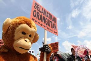 Empat Aktivis kampanyekan pelestarian orang utan