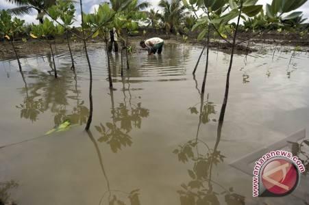 Kawasan resapan air akan ditanami bakau