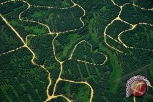 Greebpeace: Paksa perusahaan sawit perbaiki lahan gambut