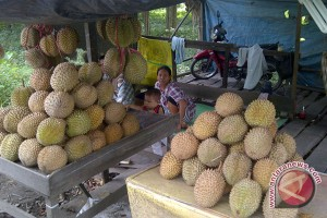 Durian Padang dipasarkan di Palembang