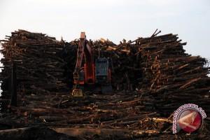 Dishutbun tegur PT Lonsum terkait pengolahan kayu