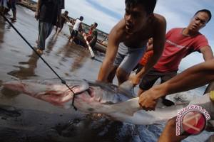 KKP larang nelayan buru hiu dan pari