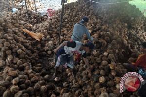 Ekspor buah kelapa Sumsel ke Tiongkok meningkat