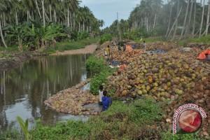 Buah kelapa Sumsel dipasarkan ke Jakarta