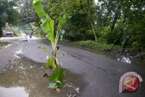 Jalan rusak, warga tanami pohon pisang