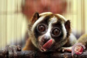 Gembira Loka Zoo tambah koleksi satwa