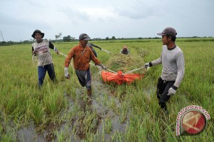 Pemanfaatan asuransi pertanian di Sumsel belum optimal
