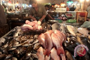 Bangka tengah menjadi percontohan produksi ikan higienis