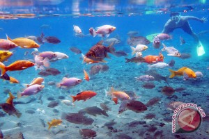 "Nelayan butuh alat deteksi kumpulan ikan ""fish finder"""