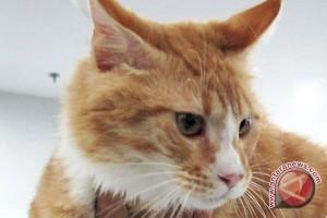 Tman satwa Cikembulan dirikan rumah kucing