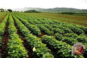 Ilmuwan temukan cara sistem kekebalan tanaman melawan penyakit