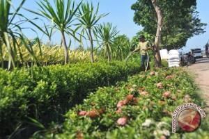 Warga Palembang percantik pekarangan dengan tanaman hias