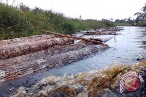 200 Ha hutan TNKS dibabat perambah pertahun