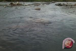 Pemkot siapkan Rp100 miliar normalisasi sungai beringin