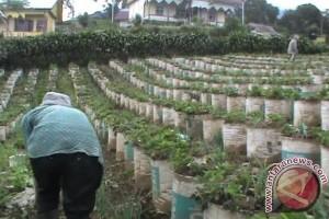 Usaha bibit buah di Palembang menjanjikan