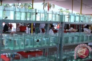 Bisnis ikan cupang di Palembang menggiurkan