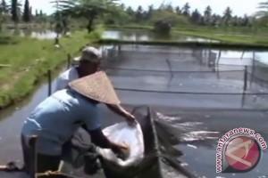 Petani ikan Palembang alami kerugian akibat banjir