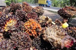 Pemkab Tanjungjabung barat segel perusahaan sawit ilegal