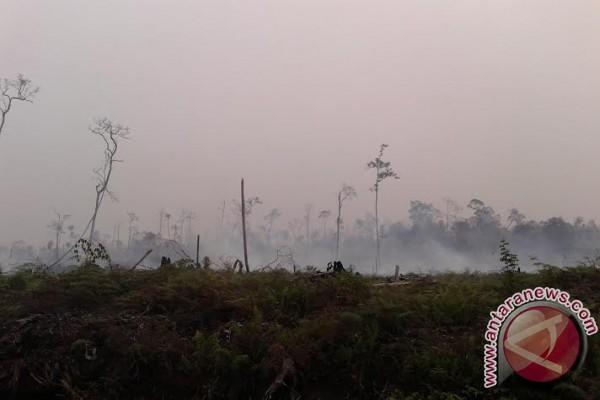 Lahan gambut Indonesia berpotensi sumbang devisa negara