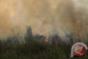 20 hektare lahan terbakar di teluk meranti