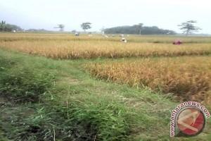 Wagub: Swasembada pangan sangat tergantung kondisi air