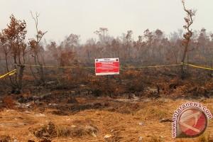 Tanpa tebang pilih menjerat pembakar lahan