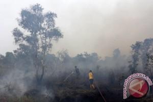 Deputi: restorasi gambut diutamakan lahan terbakar 2015