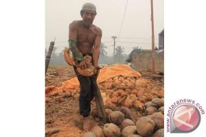 Tekuni profesi mengupas kelapa melawan himpitan ekonomi
