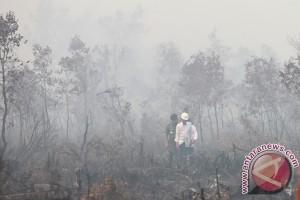 SHI: Jutaan hektare hutan Sumsel rusak
