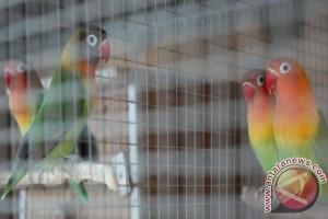 Bali Bird Park dominan dikunjungi wisman
