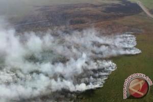 Kebakaran hutan jangan sampai terulang
