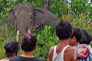 Ketika gajah dan manusia saling jatuh cinta