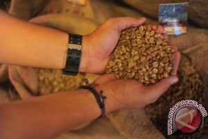 Mesir meminati kopi Sumsel