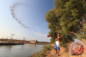 Cara petani Sumsel menyiasati anjloknya harga karet-sawit