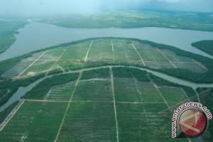 10.000 hektare kawasan hutan Sumsel dirambah perkebunan sawit