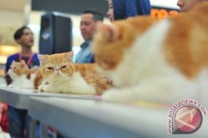 Kontes kucing nasional di Palembang meriah