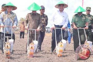 Pemerintah programkan peremajaan karet ditanam jagung