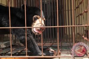 Temuan tentang beruang KBB dilaporkan ke Menteri Siti