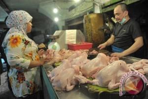 Produksi ayam potong turun 30 persen