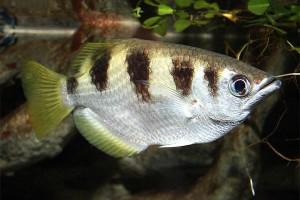 Ternyata ikan bisa kenali wajah manusia